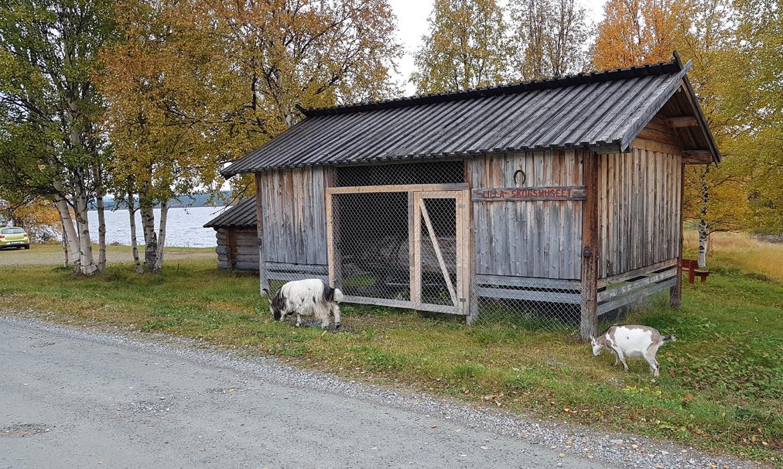 Lilla Skogsmuseet