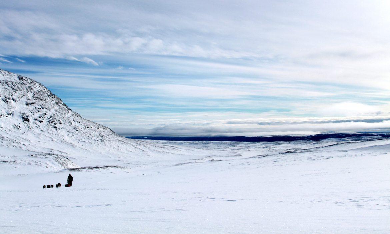 sleddog musher Ljungdalen